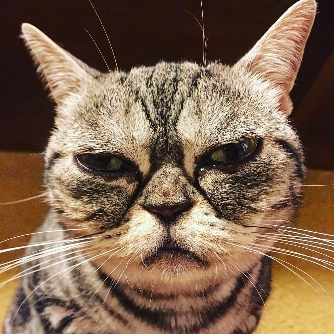 中崎町猫カフェ「猫の時間」は長毛種がいっぱいでモフモフに癒される空間