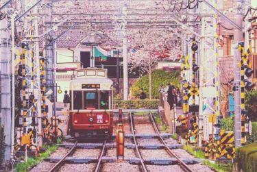 2020 公園 桜 飛鳥 山